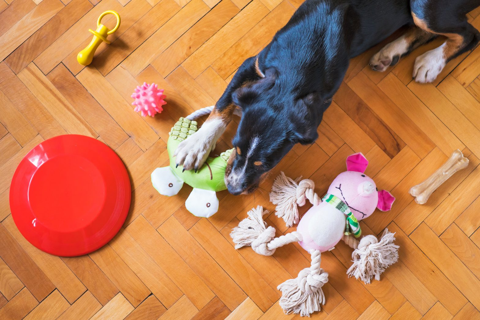 dog laying on wood floor surrounded by toys and frisbee